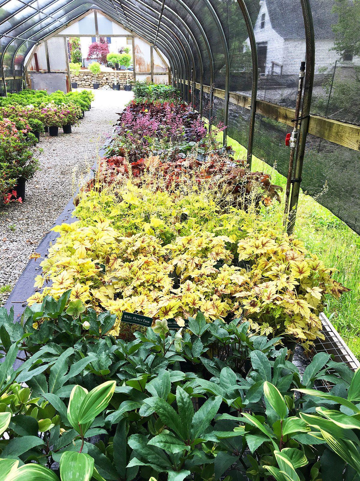 Perennials at Hopkins Hill Nursery