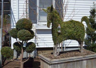 sculpted shrubs