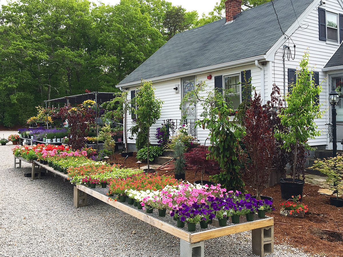 Plants and Flowers at Hopkins Hill Nursery