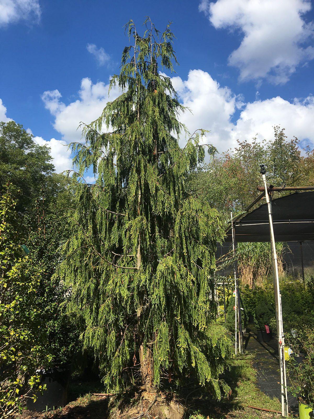 Trees at Hopkins Hill Nursery